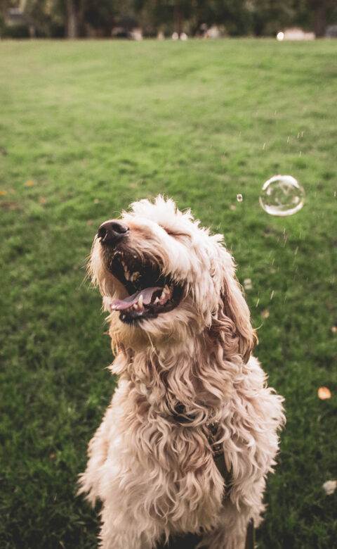 dogs and tick prevention