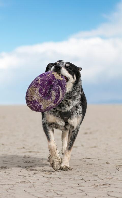dog agility toronto