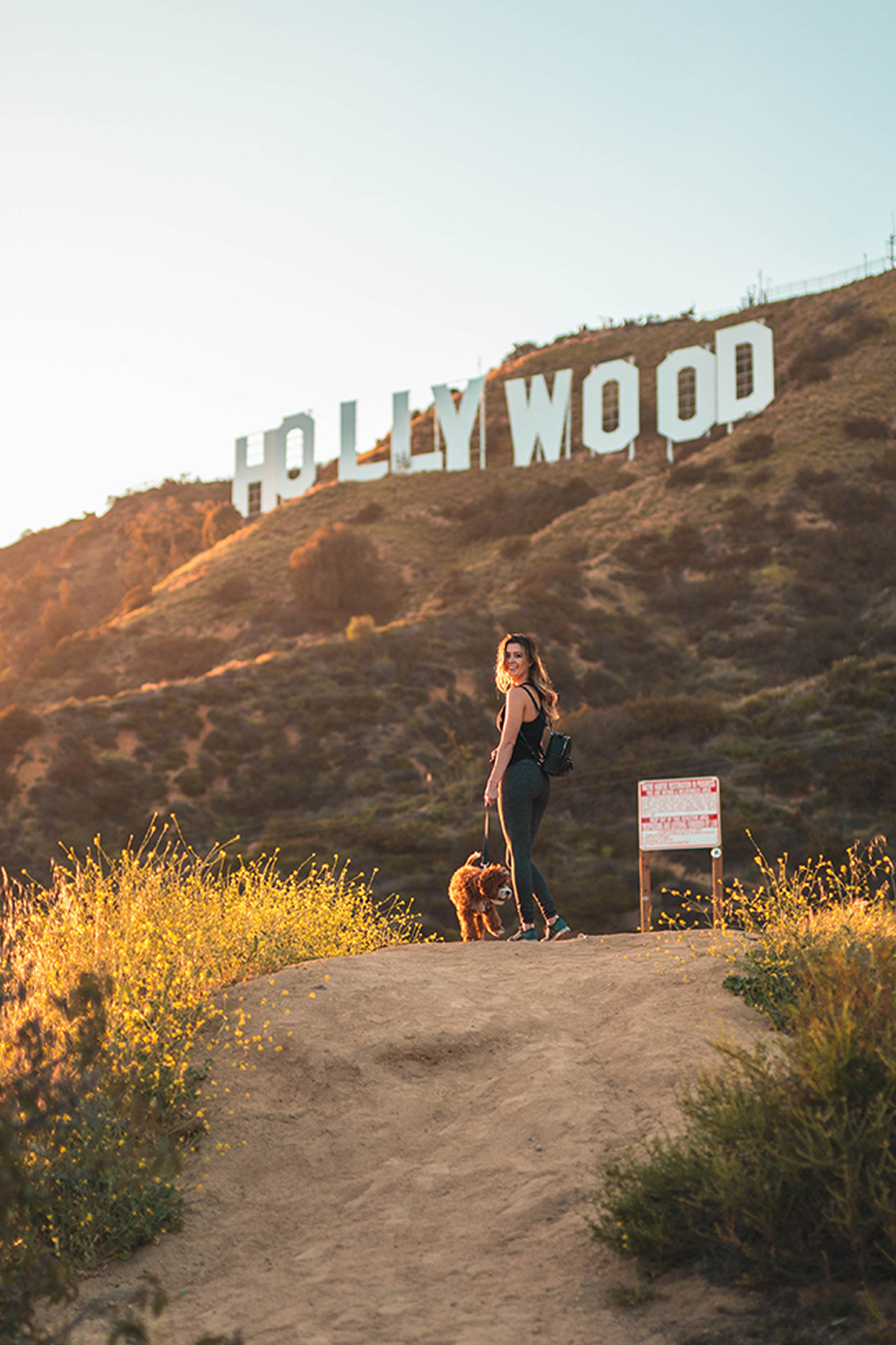 dog actors in hollywood