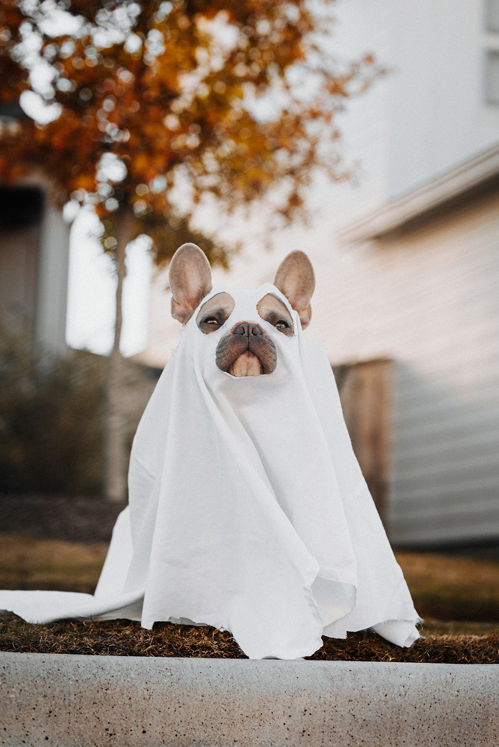 dog friendly halloween costumes
