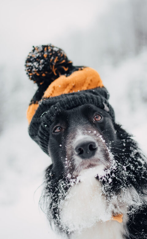 dogs and winter safety