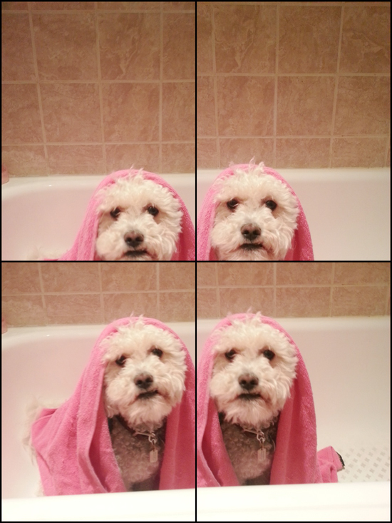 Pet-Wellness-Bathroom-Safety-Pawsh-Magazine