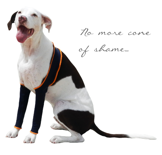cone-of-shame-dog-leggings
