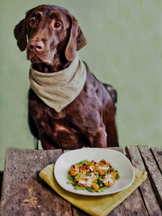 dog-friendly-recipes