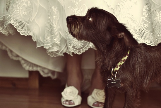 wedding-dogs-3