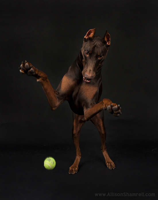 Allison Shamrell dog photography 2