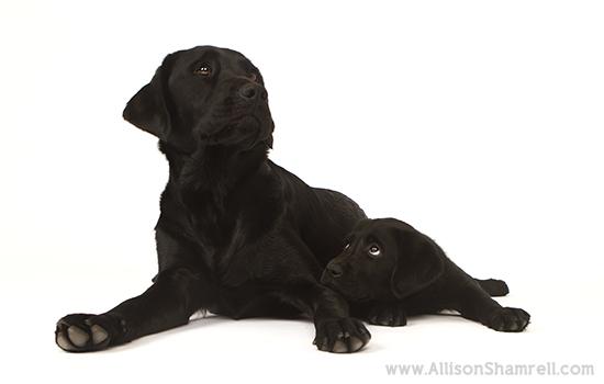 Allison Shamrell dog photography 3