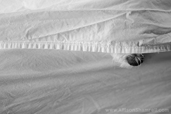 Allison Shamrell dog photography 8