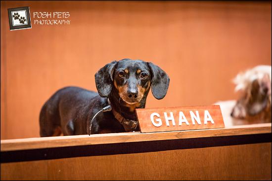 dachsundUN-Ghana-Simon