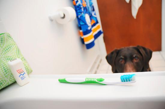 dog-dental-health-1
