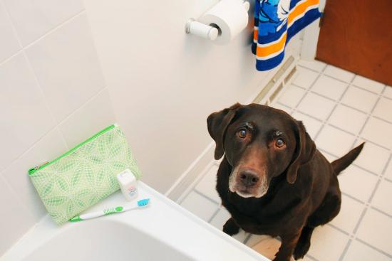 dog-dental-health-3
