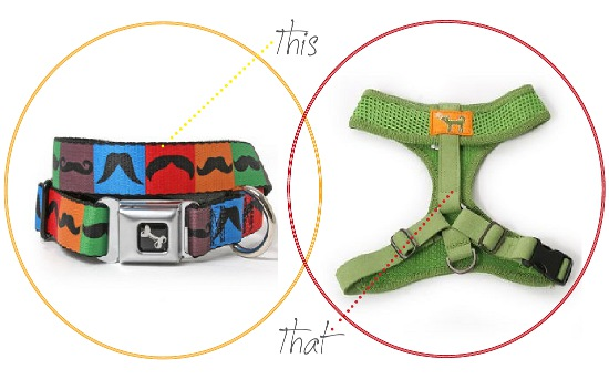this-or-that--dog-harness