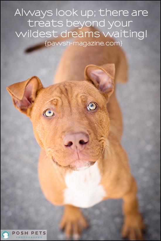 Dog Breed Xo