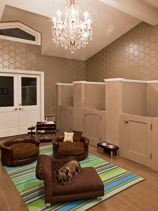 dog-room-design