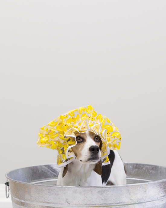 Pawsh-Magazine-how-to-bath-a-dog-4
