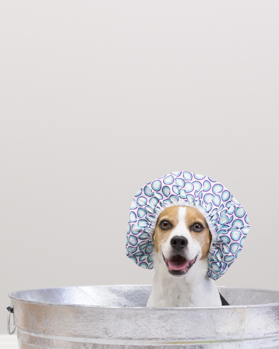 Pawsh-Magazine-how-to-bath-a-dog