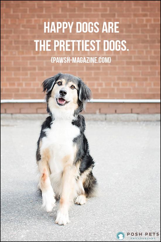 Pawsh-magazine-dog-quote-17