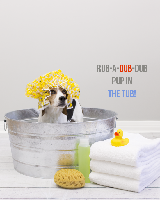 Pawsh-magazine-how-to-bath-a-dog-1a