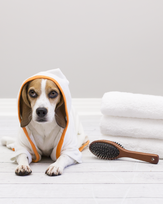 Pawsh-magazine-how-to-bath-a-dog-7