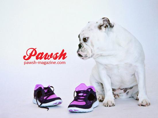 Pawsh-print-shop-550-a