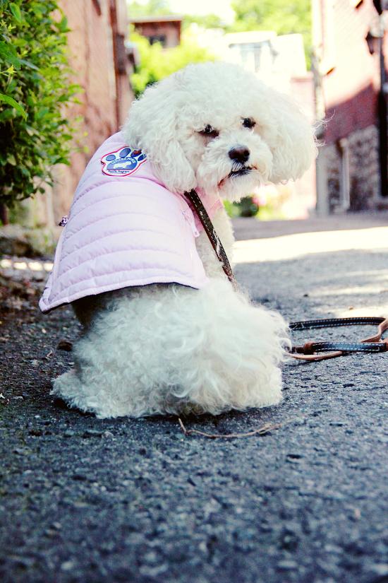 canada-pooch-rain-jacket-pink-2