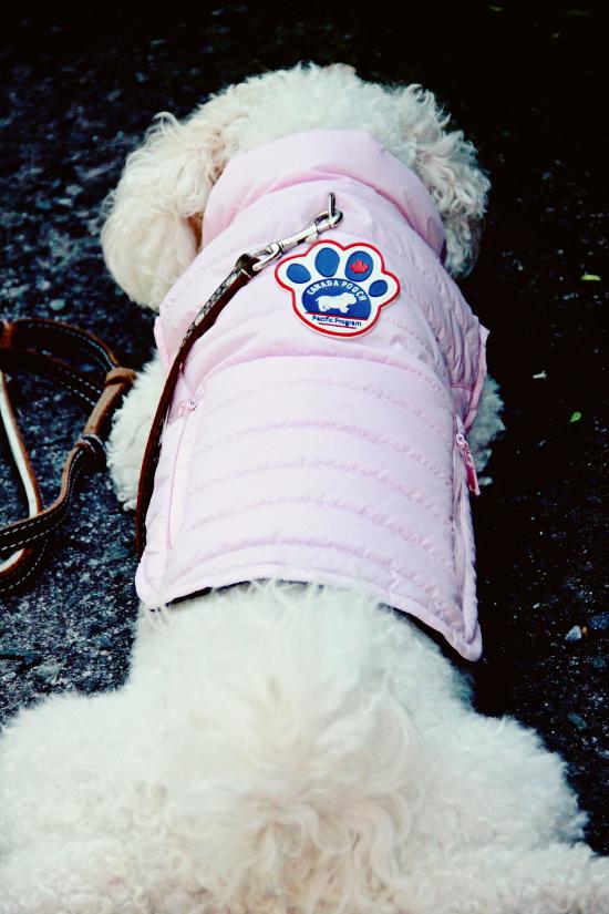 canada-pooch-rain-jacket-pink-3