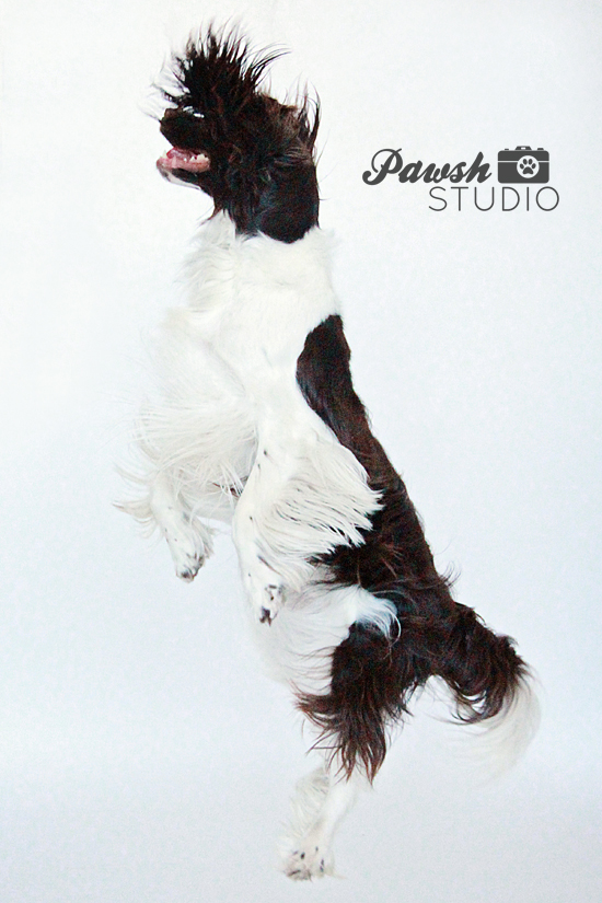 Pawsh-Studio-Holiday-Dog-Prints-3
