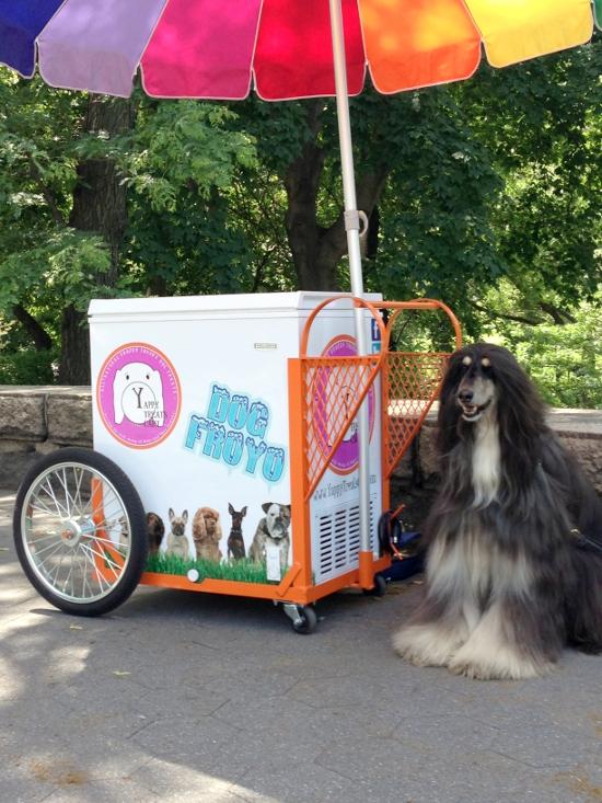 dog-friendly-icecream-cart