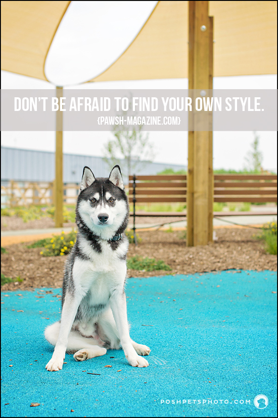 pawsh-magazine-dog-quote-18