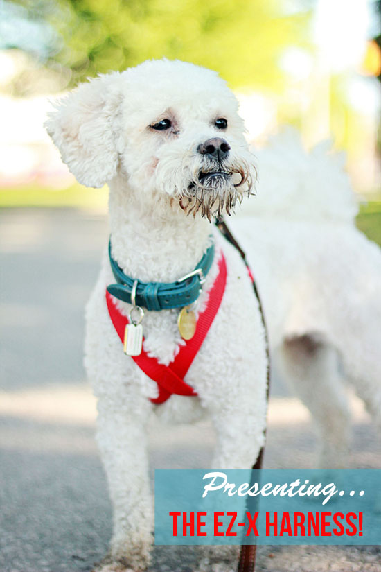 pawsh-magazine-modern-dog-harness-ex-z-1