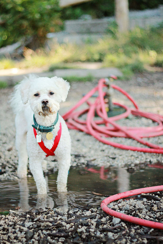 pawsh-magazine-modern-dog-harness-ez-x-4