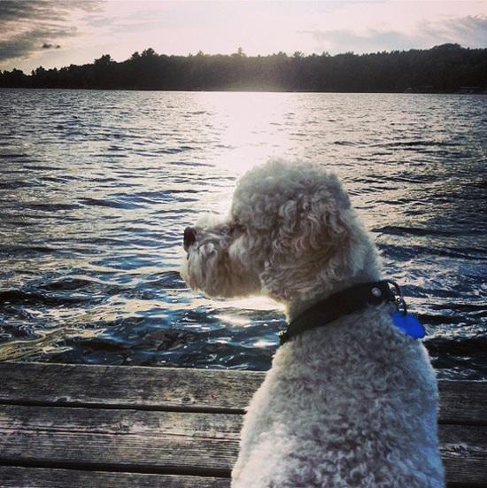 Dog-on-lake
