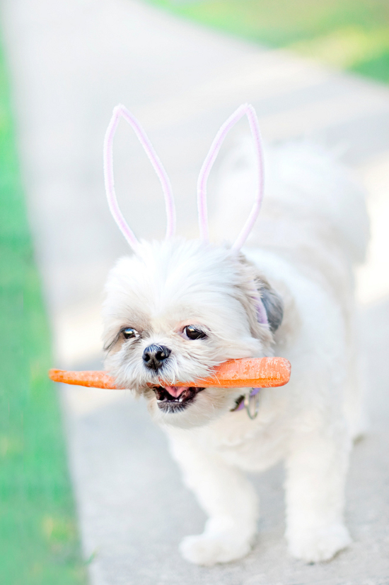 Easter-Beany-Dog-_-Chic-Sprinkles
