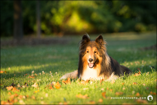 Posh-Pets-Photography-Pawsh-Series