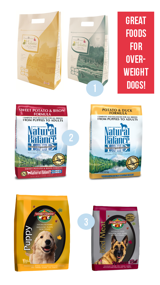 dog-foods-for-overweight-dogs