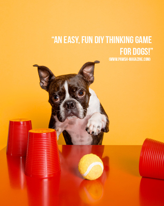 dog-games-pawsh-magazine-1a
