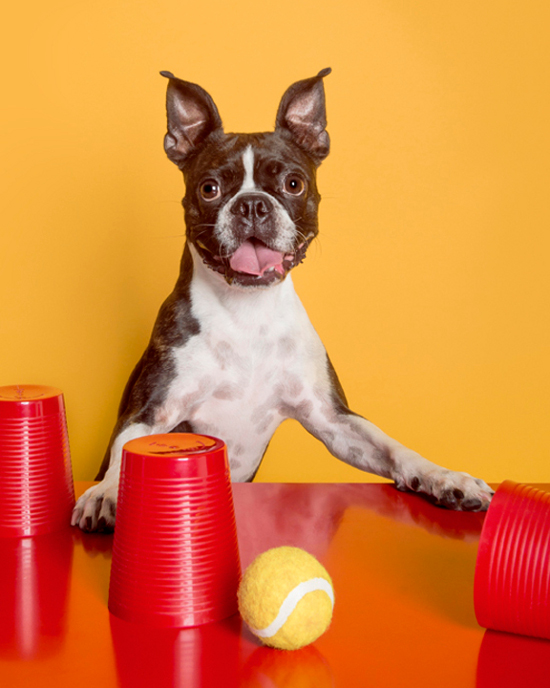 dog-games-pawsh-magazine-3