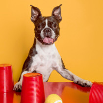 dog-games-pawsh-magazine-3