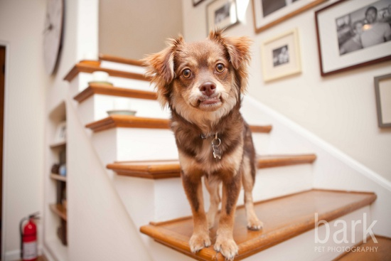dog-photography-tips