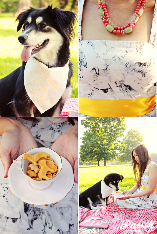 dog-picnic-toronto-dog-photographer-pawsh