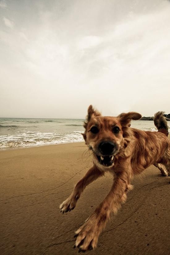healthy-dog-challenge