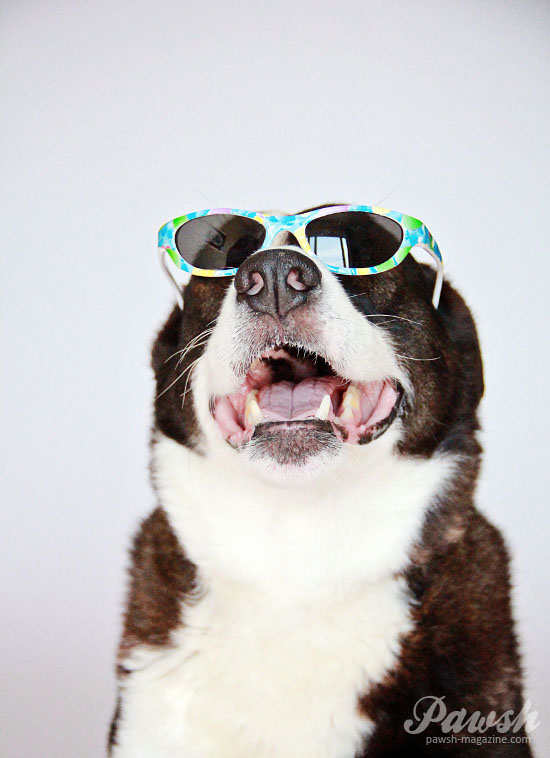 how-to-keep-dogs-cool-3-pawsh-magazine-WM