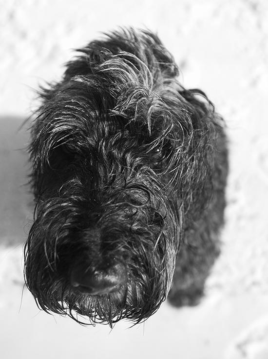 san diego dog photographer 3