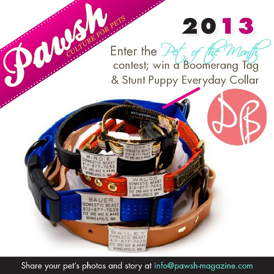 Pawsh-pet-of-month-contest-October-2013