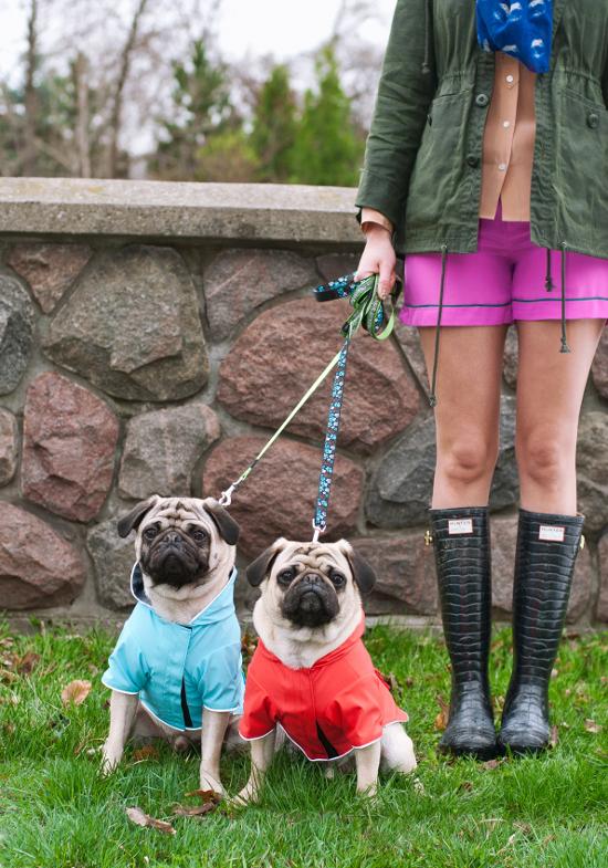 dog-fashions-5