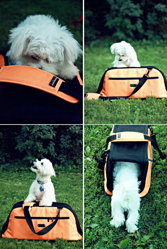 sleepypod-review-pawsh