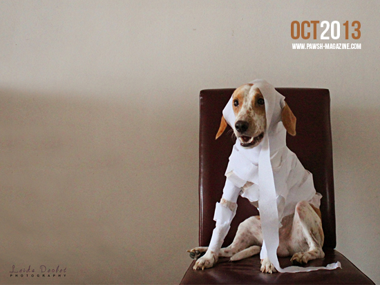 PAWSH-October-Wallpaper-SMALL