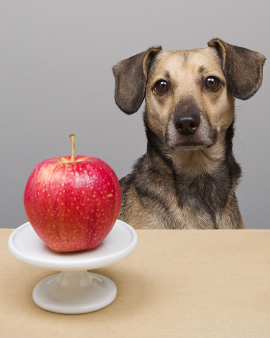 Pawsh-apples-for-dogs
