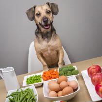 pawsh-dog-friendly-human-food