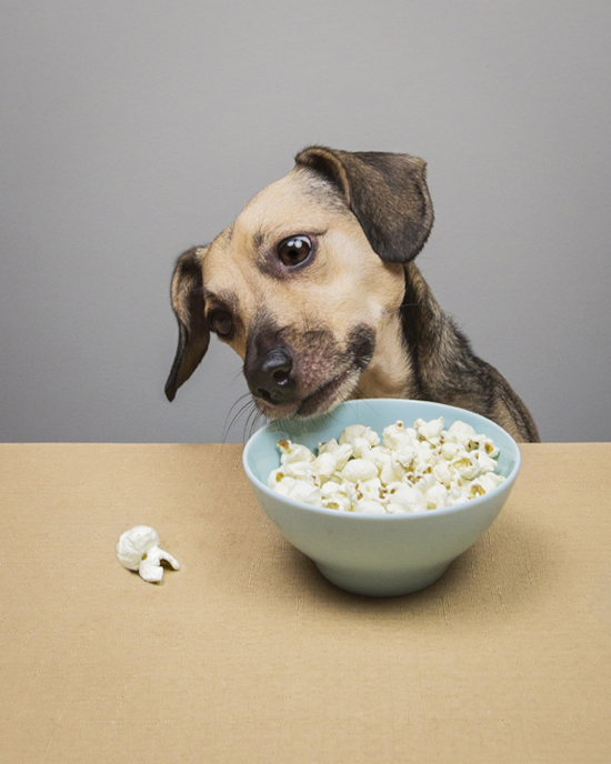 Pawsh-popcorn-for-dogs